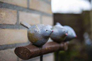 galerij-dier-3- vogeltjes-op-tak1-9124
