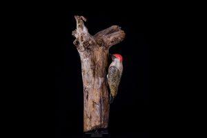galerie-dier-groene-specht-8993