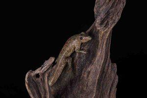 galerij-dier-salamander1-8991