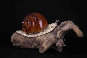 galerij-dier-slak-bruin1-8955
