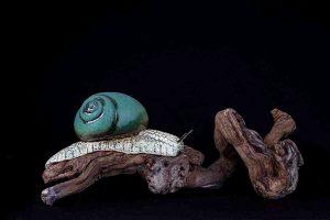 galerij-dier-slak-groen-blauw-8790