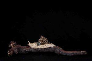 galerij-dier-wijngaardslak-druiventros2-9024