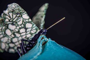 galerie-urn-vlinder2-8769